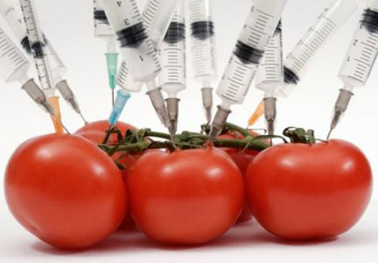 Genetically Modified Foods (GM)