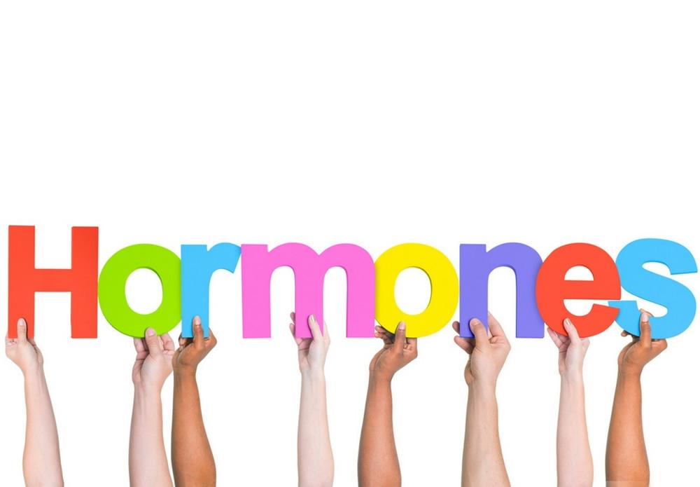 hormones, Human body