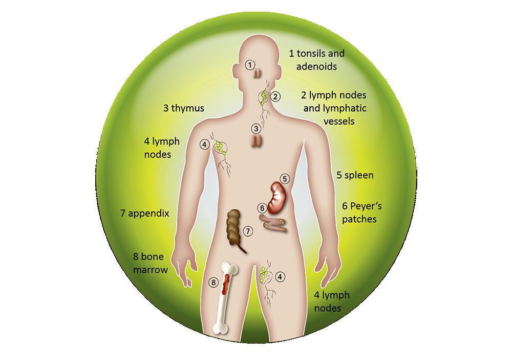 slecht immuunsysteem symptomen