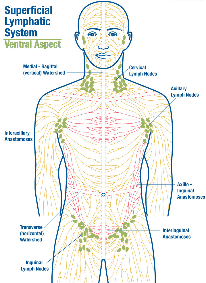 manual-lymph-drainage-lethbridge.png