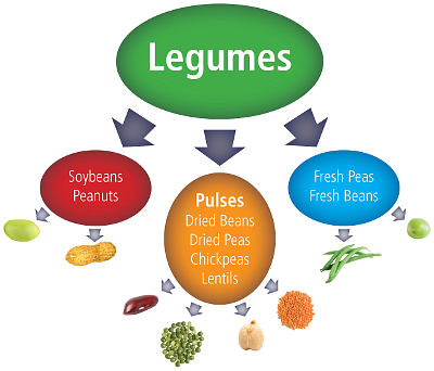 What Are Pulses Legumes