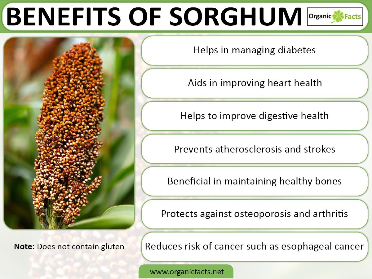 teaser-11-sorghum-pop-up.jpg