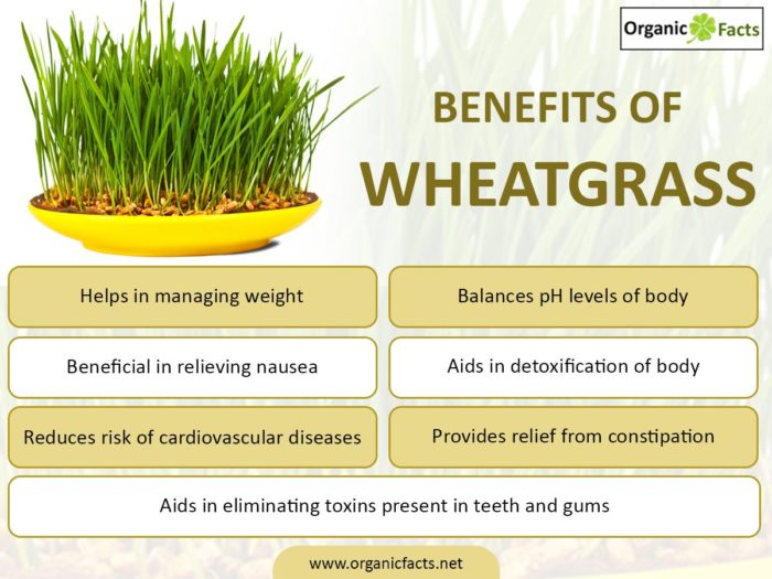 wheatgrassinfo-700x525.jpg